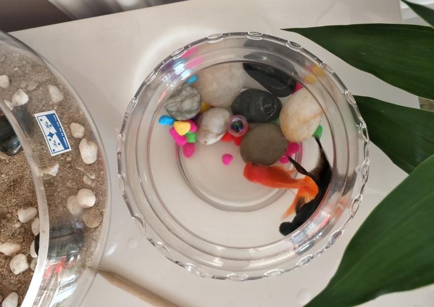 鹅卵石鱼缸